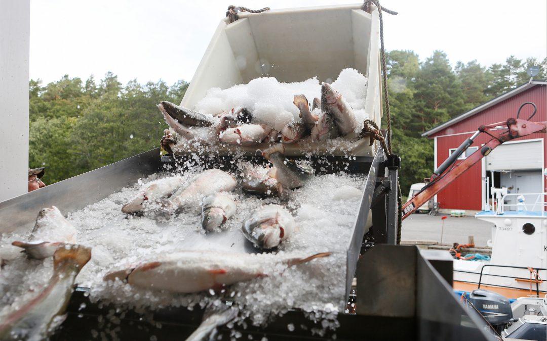 Kalatalousalueille vuosi lisäaikaa uusien käyttö- ja hoitosuunnitelmien laatimiseen – suunnitelmien yhtenä tarkoituksena kaupallisen kalastuksen toimintaedellytysten parantaminen
