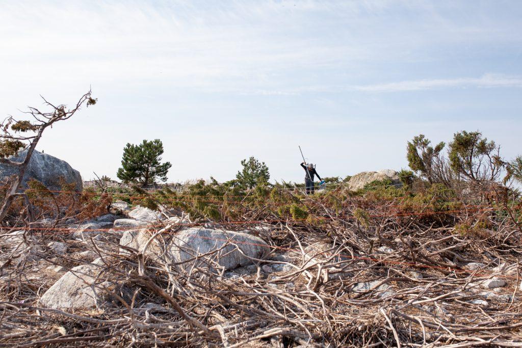 Tutkija etsii merimetsojen syömien ahventen PIT-merkkejä etsintälaitteella Merenkurkun saaressa.