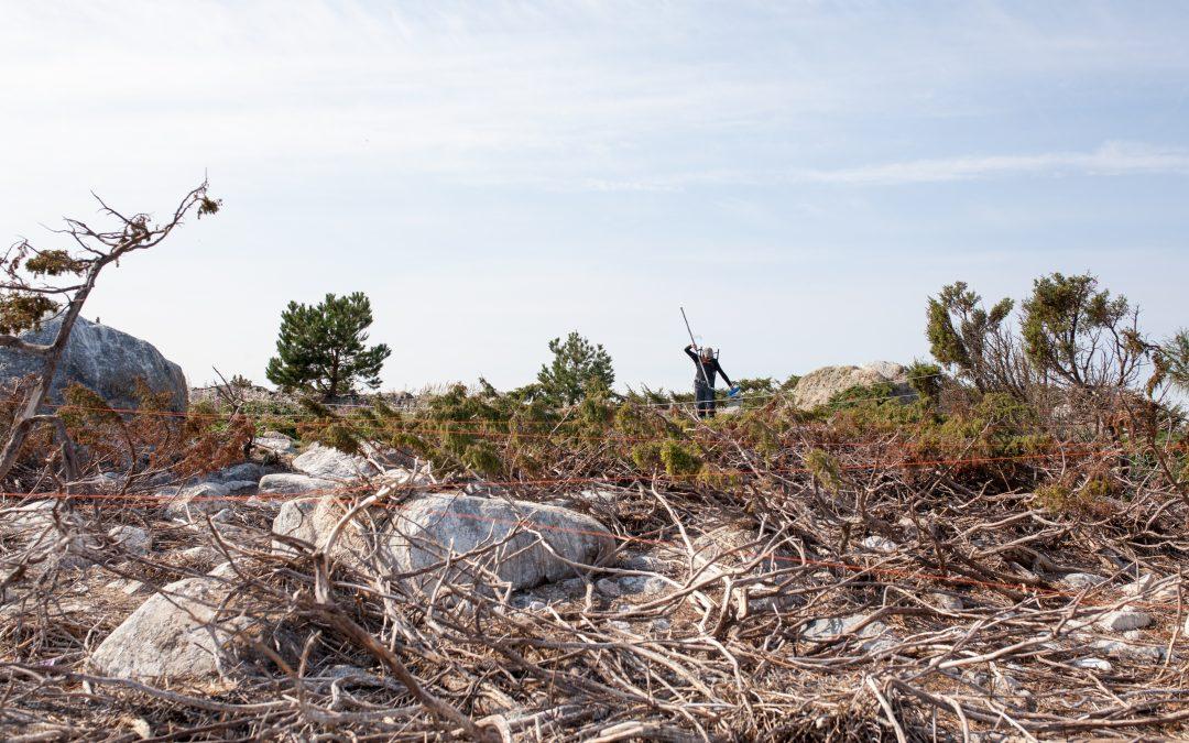 Luonnonvarakeskuksen ja Jyväskylän yliopiston selvitys: Merimetsojen saalistus voi heikentää ahvensaaliita erityisesti pesimäalueiden lähistöllä