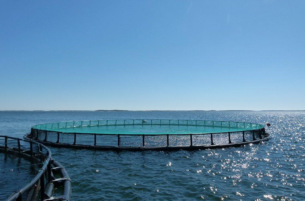 Blogi: Kala osaksi kestävää ruokajärjestelmää
